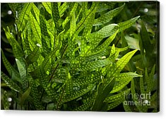 Jungle Spotted Fern Acrylic Print