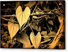 Jungle Vines Acrylic Print