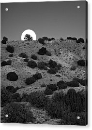 Juniper At Moonrise Acrylic Print