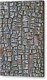 Juniper Bark- Texture Collection Acrylic Print by Tom Janca
