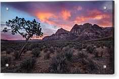 Juniper Sunset Acrylic Print