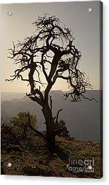 Juniper Tree At Grand Canyon Acrylic Print by David Gordon