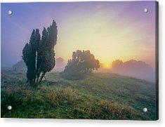 Juniper Trees In Early Morning Fog  Acrylic Print by Martin Liebermann