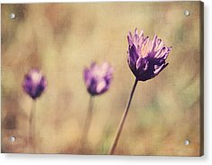 Just A Breath Away Acrylic Print by Laurie Search