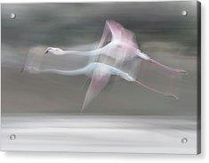 Just A Dream Acrylic Print