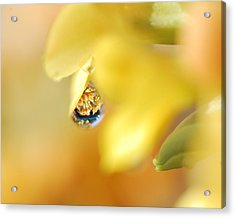 Just A Drop Of Spring Acrylic Print by Susan Capuano