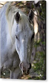 Just A Horse Acrylic Print by Juls Adams