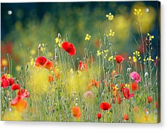 Just A Perfect Day Acrylic Print