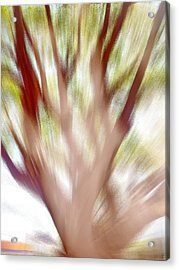 Just A Tree Acrylic Print by Beto Machado