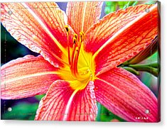 Just Another Day Lilly Acrylic Print by Mayhem Mediums