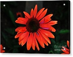 Acrylic Print featuring the photograph Just As Pretty by Judy Wolinsky