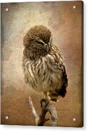 Just Awake Little Owl Acrylic Print