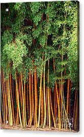 Just Bamboo Acrylic Print by Sue Melvin