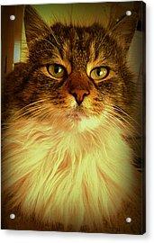 Just Cat Acrylic Print