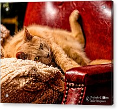 Just Chillin Acrylic Print by Christopher Holmes