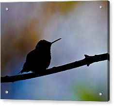 Acrylic Print featuring the photograph Just Chillin by Robert L Jackson