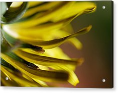 Acrylic Print featuring the photograph Just Dandy by Wendy Wilton