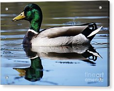 Just Ducky. Acrylic Print