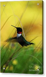 Just Flying Acrylic Print by Lori Tambakis