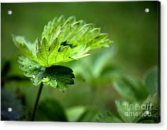 Just Green Acrylic Print