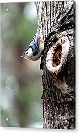 Just Hanging Around Acrylic Print by Kathy  White