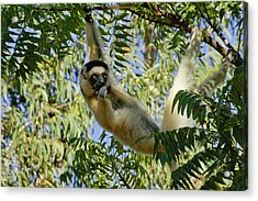 Just Hanging Around Acrylic Print by Michele Burgess