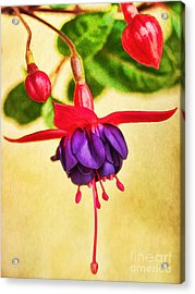 Just Hanging Around Acrylic Print by Peggy Hughes