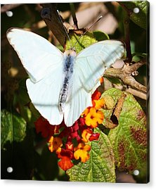 Just Hanging Out Acrylic Print by Bruce Bley