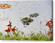Acrylic Print featuring the photograph Just Hanging Out by Cynthia Guinn