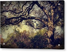 Just How It Ought To Be Acrylic Print by Laurie Search