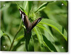 Just Landed Acrylic Print
