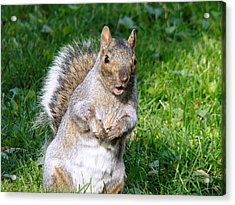 Just Nuts Acrylic Print