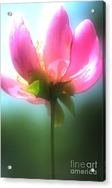 Just One Acrylic Print by Kathleen Struckle