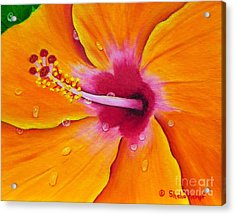 Acrylic Print featuring the painting Just Peachy - Hibiscus Flower  by Shelia Kempf