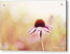 Just Peachy Acrylic Print by Beve Brown-Clark Photography