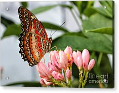 Just Pink Butterfly Acrylic Print