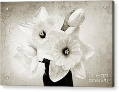 Just Plain Daffy 1 B W - Flora - Spring - Daffodil - Narcissus - Jonquil Acrylic Print by Andee Design