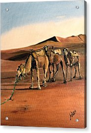 Just Us Camels Acrylic Print