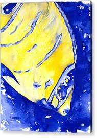 Juvenile Queen Angelfish Acrylic Print