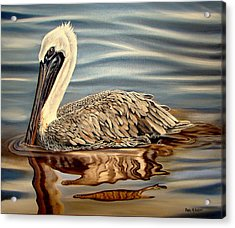 Acrylic Print featuring the painting Juvenile Pelican by Phyllis Beiser