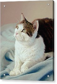 K C  Kitty Cat Acrylic Print by Barbara Groff