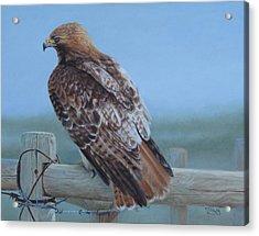 Kaiser's Hawk Acrylic Print