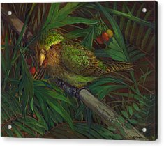 Kakapo Nighttime Feeding Acrylic Print by ACE Coinage painting by Michael Rothman