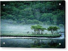 Kakumanbuchi Marsh Acrylic Print