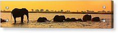 Acrylic Print featuring the photograph Kalahari Elephants Crossing Chobe River by Amanda Stadther