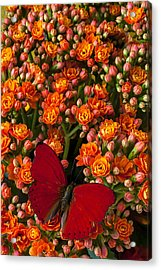 Kalanchoe Plant With Butterfly Acrylic Print by Garry Gay