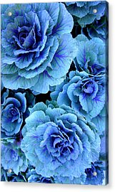 Kale Acrylic Print by Laurie Perry