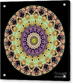Kaleidoscope Ernst Haeckl Inspired Sea Life Series Acrylic Print by Amy Cicconi