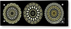 Kaleidoscope Ernst Haeckl Sea Life Series Steampunk Feel Triptyc Acrylic Print by Amy Cicconi