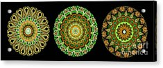 Kaleidoscope Ernst Haeckl Sea Life Series Triptych Acrylic Print by Amy Cicconi